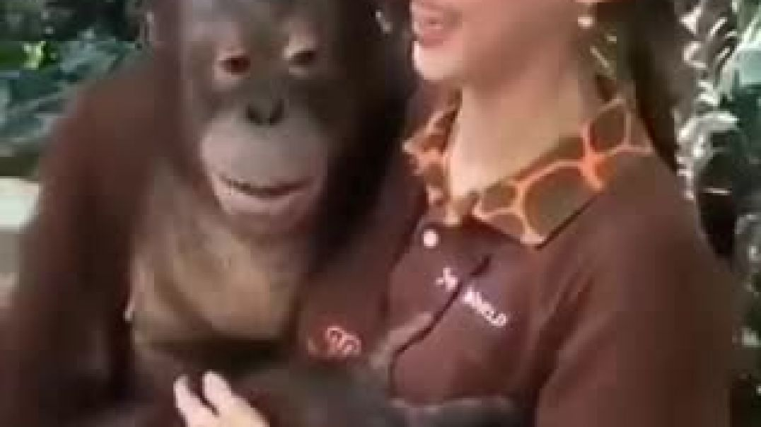 She fell in love with the chimpanzee